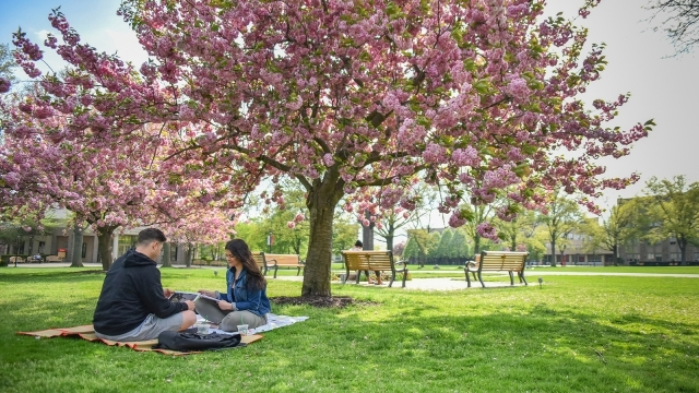 Two students sitting under a tree on the grass studying